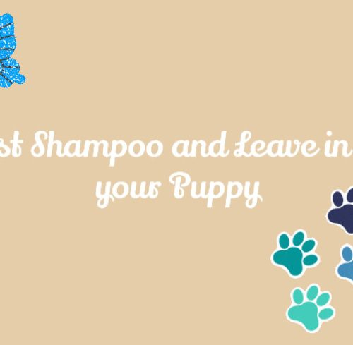 best shampoo and leave in for your puppy